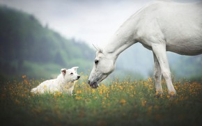 Picture field, forest, white, summer, look, flowers, pose, fog, horse, horse, dog, yellow, meadow, pair, white, …