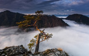 Picture clouds, landscape, mountains, clouds, nature, tree, Poland, forest, pine
