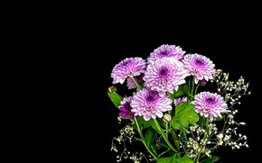 Picture Flowers, rendering, bouquet of chrysanthemums, black background