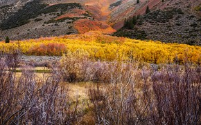 Picture autumn, forest, trees, mountains, valley, the bushes
