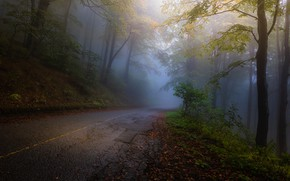 Picture Autumn, Yellow, Road, Fog, Forest