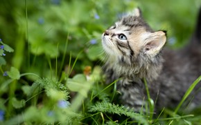 Picture grass, look, kitty, baby, muzzle