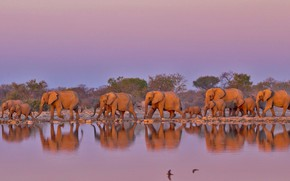 Picture elephants, South Africa, the herd, Kruger national Park