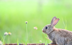 Picture grass, look, nature, background, stems, glade, hare, rabbit, profile, bricks, flowers, Bunny, green background, rabbit, …