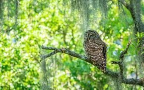 Picture light, branches, tree, owl, bird, sleep, sleeping, green background, bokeh, closed eyes, owl