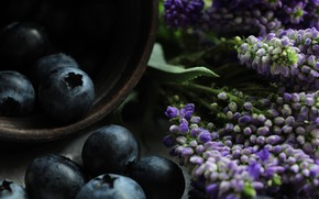 Picture macro, flowers, berries, the dark background, food, blueberries, Cup, bowl, black, a bunch, lilac, composition
