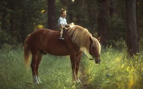 Picture joy, horse, horse, boy