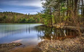 Picture forest, the sky, trees, lake, water surface