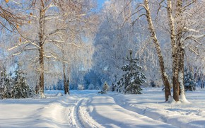 Picture winter, frost, forest, snow, trees, landscape, nature, ate, birch, tropinka