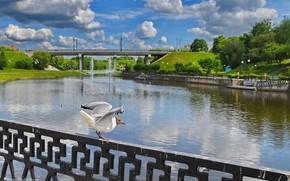 Picture summer, landscape, the city, river