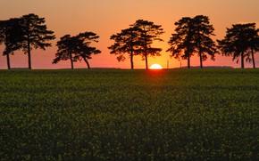 Picture field, trees, sunset, rape, Hungary, Hungary, Keszthely, Keszthely