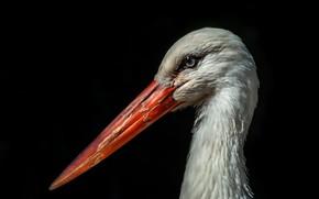Picture background, bird, stork