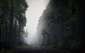 Picture Road, Forest, Star Wars, Dark Side, Fantasy, Star wars, Fiction, Fiction, Road, Forest, Sci-Fi, Stormtrooper, …
