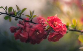 Picture macro, red, branch, flowering