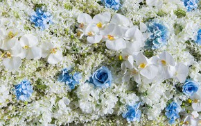 Picture flowers, white, Orchid, blue, flowers, orchid, wedding