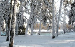 Picture winter, forest, day