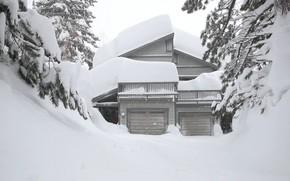 Picture Nature, Winter, Trees, Nature, Winter, Trees, Snow House, Снежный Дом