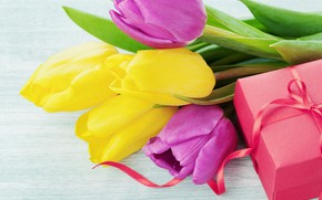 Picture gift, spring, tulips, March 8