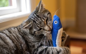 Picture cat, cat, grey, toy, the game, fish, striped