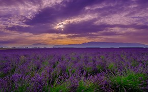 Picture summer, the sky, clouds, sunset, flowers, mountains, clouds, fog, the evening, horizon, lavender, lilac, plantation, …
