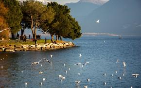Picture lake, Switzerland, Maggiore, Locarno