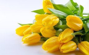 Picture white, flowers, background, bouquet, tulips