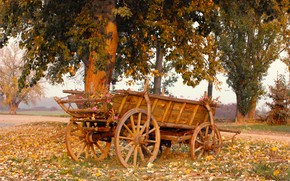 Picture autumn, foliage, cart