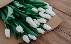 Picture flowers, tulips, bouquet of flowers
