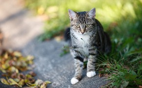 Picture road, cat, grass, look, kitty, kitty, sitting, path