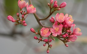 Picture flowers, branch, spring, pink, flowering