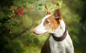 Picture each, dog, currants