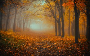 Picture autumn, forest, trees, nature, fog, foliage