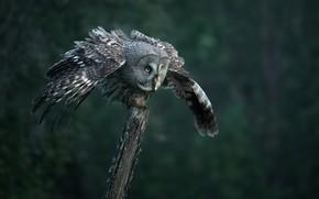 Picture look, nature, owl, bird, wings, post, stroke, bokeh, owl
