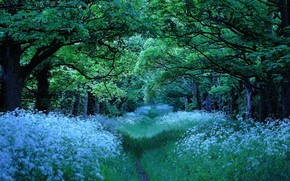 Picture forest, summer, trees, nature, trail, alley