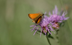 Picture nature, background, butterfly, sitting on a flower
