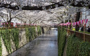 Picture The city, Spring, Trees, River, Sakura, Japan, Channel