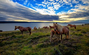 Picture sea, sunset, horse