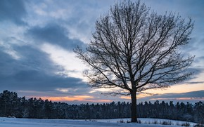 Wallpaper winter, field, forest, the sky, clouds, snow, sunset, tree, the evening, twilight