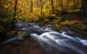 Picture autumn, forest, trees, river, Germany, Germany, Baden-Württemberg, Baden-Württemberg, Black Forest, The black forest
