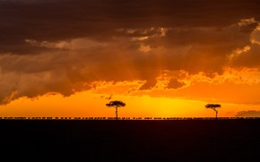 Picture sunset, silhouette, glow, Africa, the herd, Kenya, migration, wildebeest, National reserve the Masai Mara