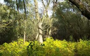 Picture autumn, forest, trees, Meduzanol ©