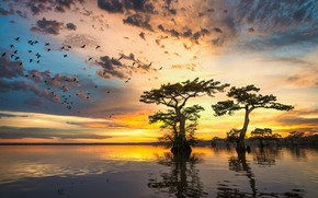 Picture the sky, clouds, trees, flight, sunset, birds, reflection, shore, pack, the evening, pond