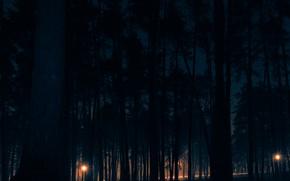 Picture night, wood, ночь в лесу
