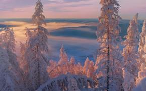 Picture winter, trees, landscape, sunset, nature, fog, ate, snow, Yakutia, Vladimir Ryabkov