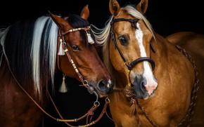 Wallpaper horses, horse, mane