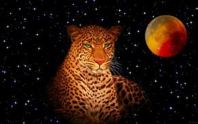 Picture the sky, stars, the moon, predator