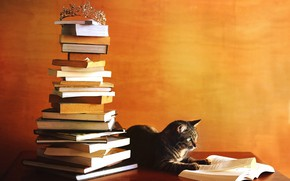 Picture autumn, cat, orange, table, grey, wall, books, mountain, crown, top, book, stack, striped, a lot, …