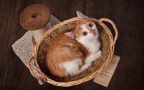 Picture look, pose, style, retro, the dark background, kitty, table, basket, Board, baby, red, muzzle, floor, …