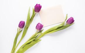 Picture flowers, bouquet, tulips, flowers, tulips, purple