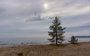 Picture beach, tree, Sunset, Lake, Ladoga
